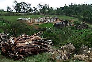 A Swazi Homestead