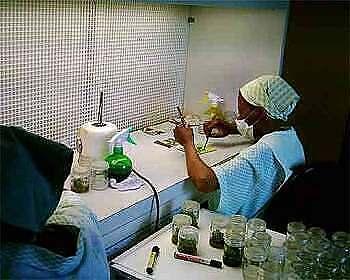 Tissue Culture Laboratory